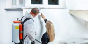 Mold repair and cleanup rochester